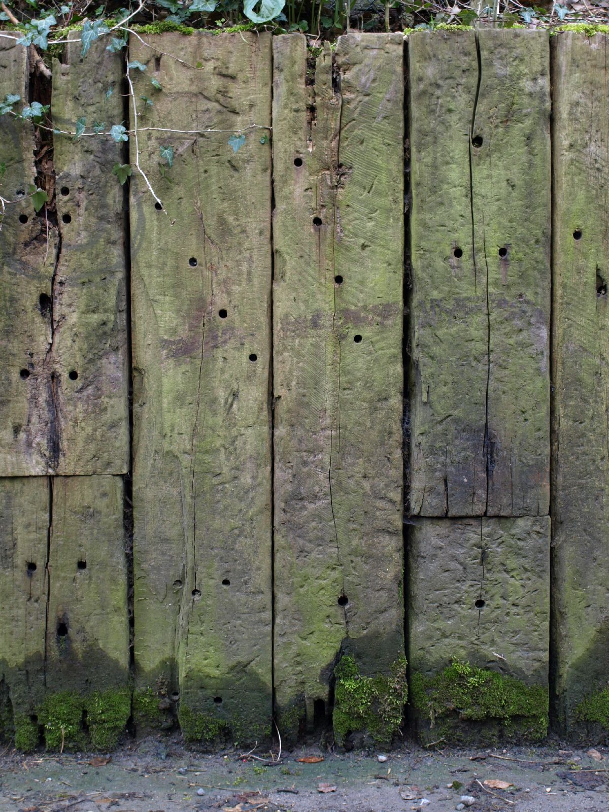Wood_Texture_A_P4201436