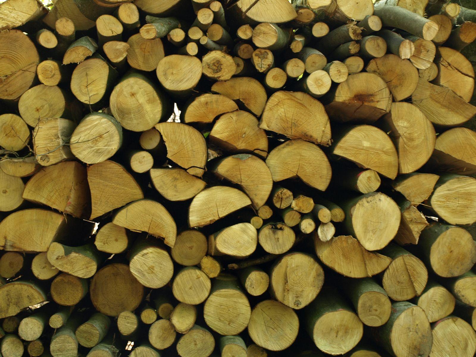 Wood_Texture_A_P5042458