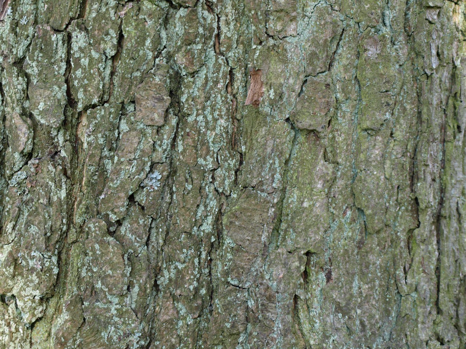Wood_Texture_A_P5112636
