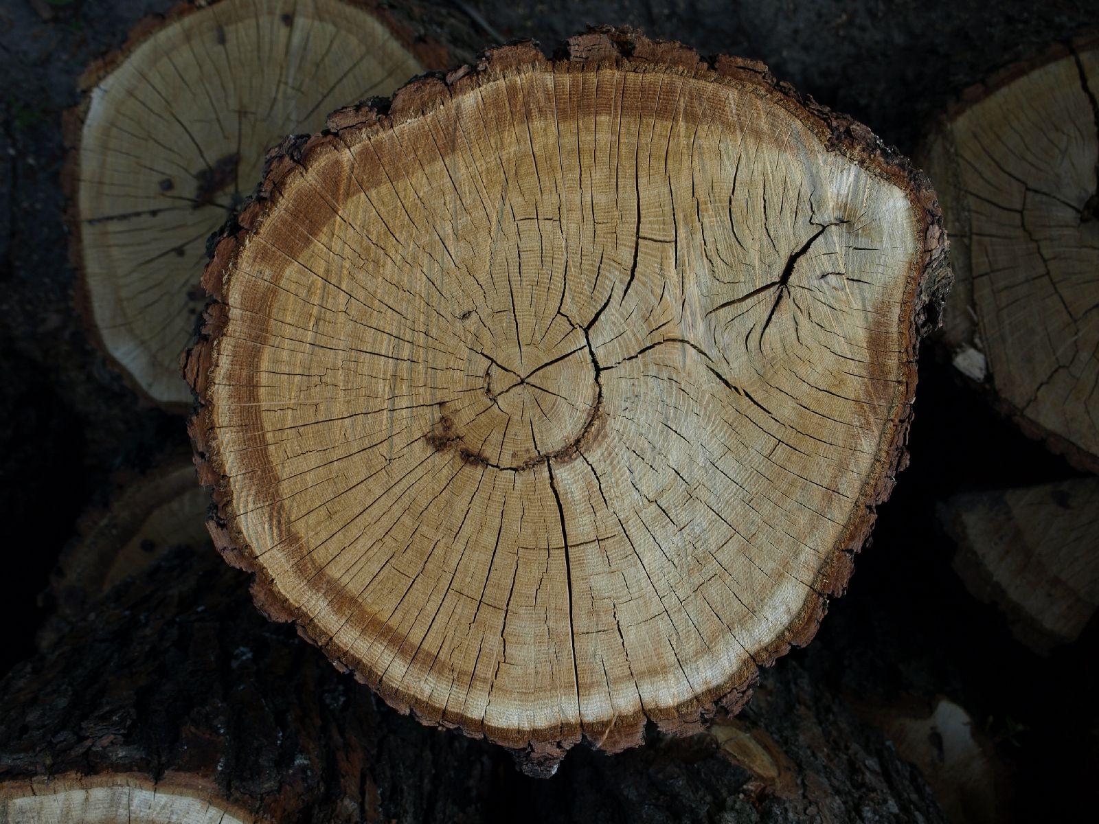 Wood_Texture_A_P5122722