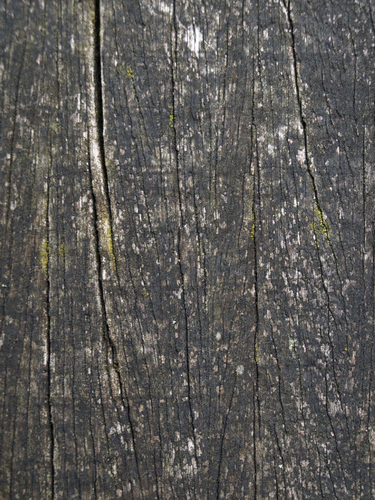 Wood_Texture_A_P5253065