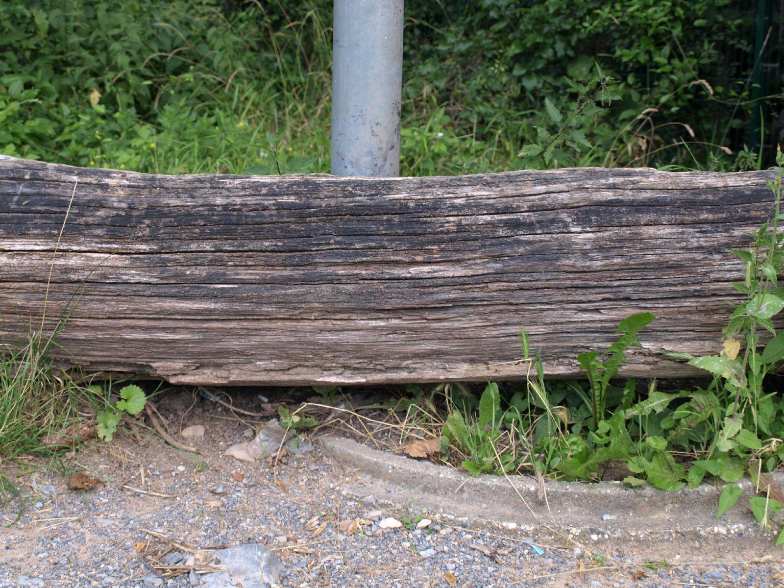 Wood_Texture_A_P8024112