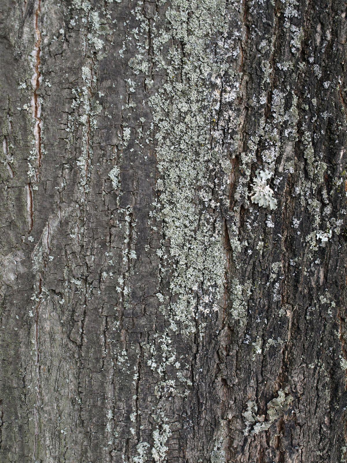 Wood_Texture_A_P9014769