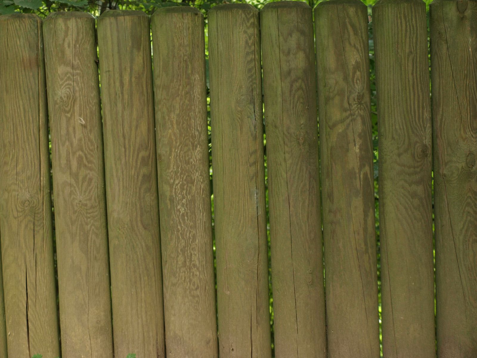 Wood_Texture_A_P9129612