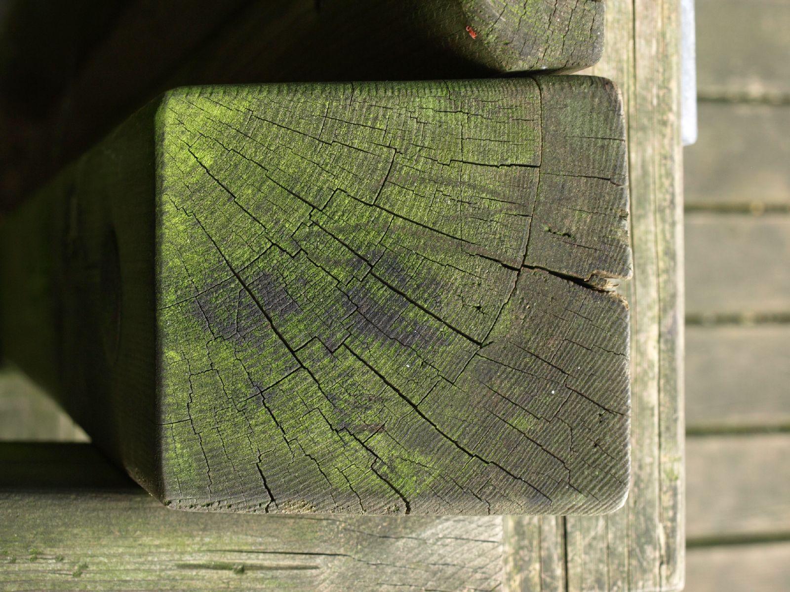 Wood_Texture_A_P9129624