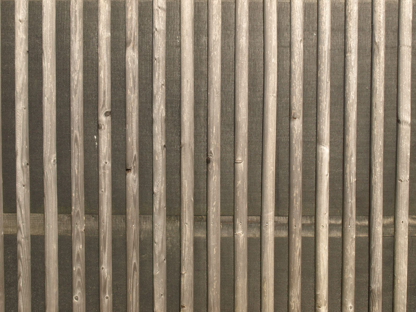 Wood_Texture_A_P9129646