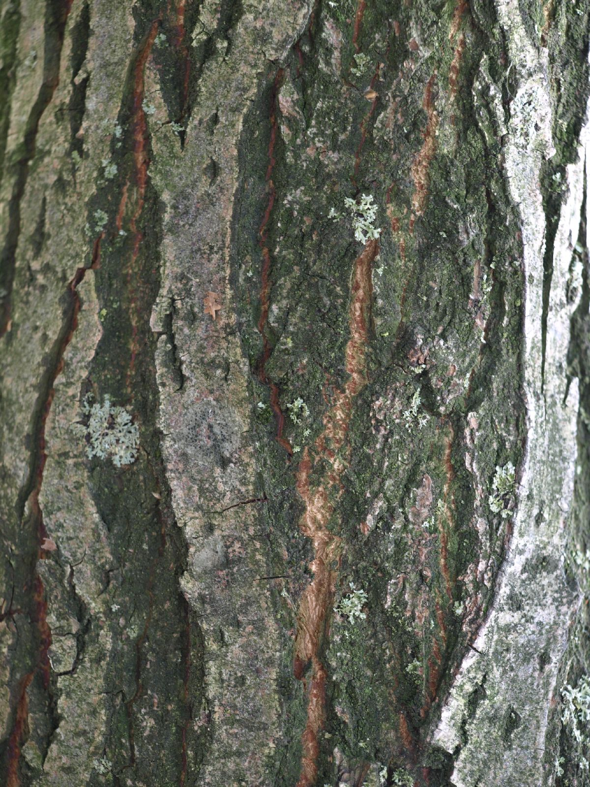 Wood_Texture_A_P9215394