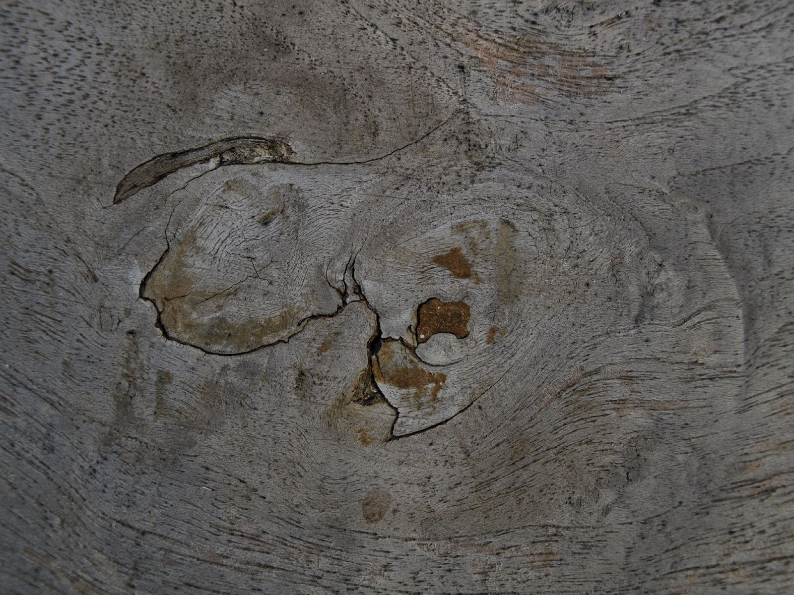 Wood_Texture_A_PA116149
