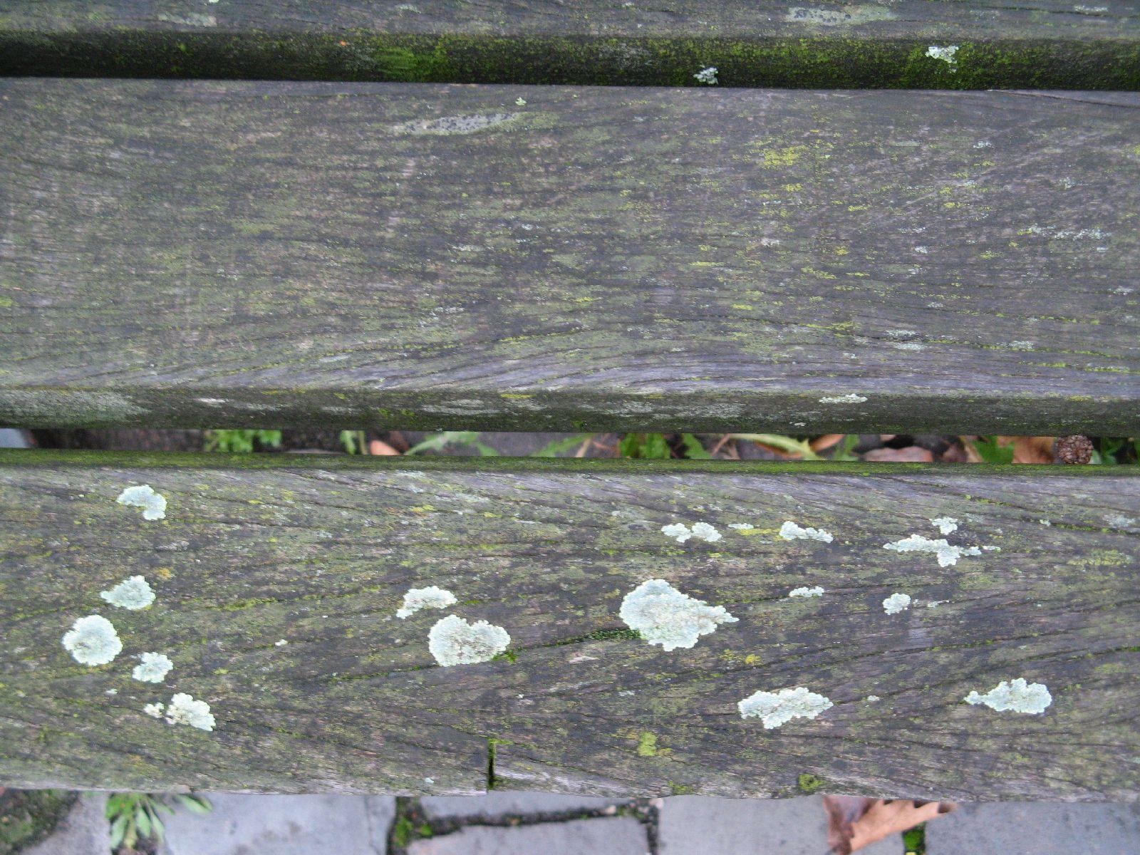 Wood_Textures_B_01541