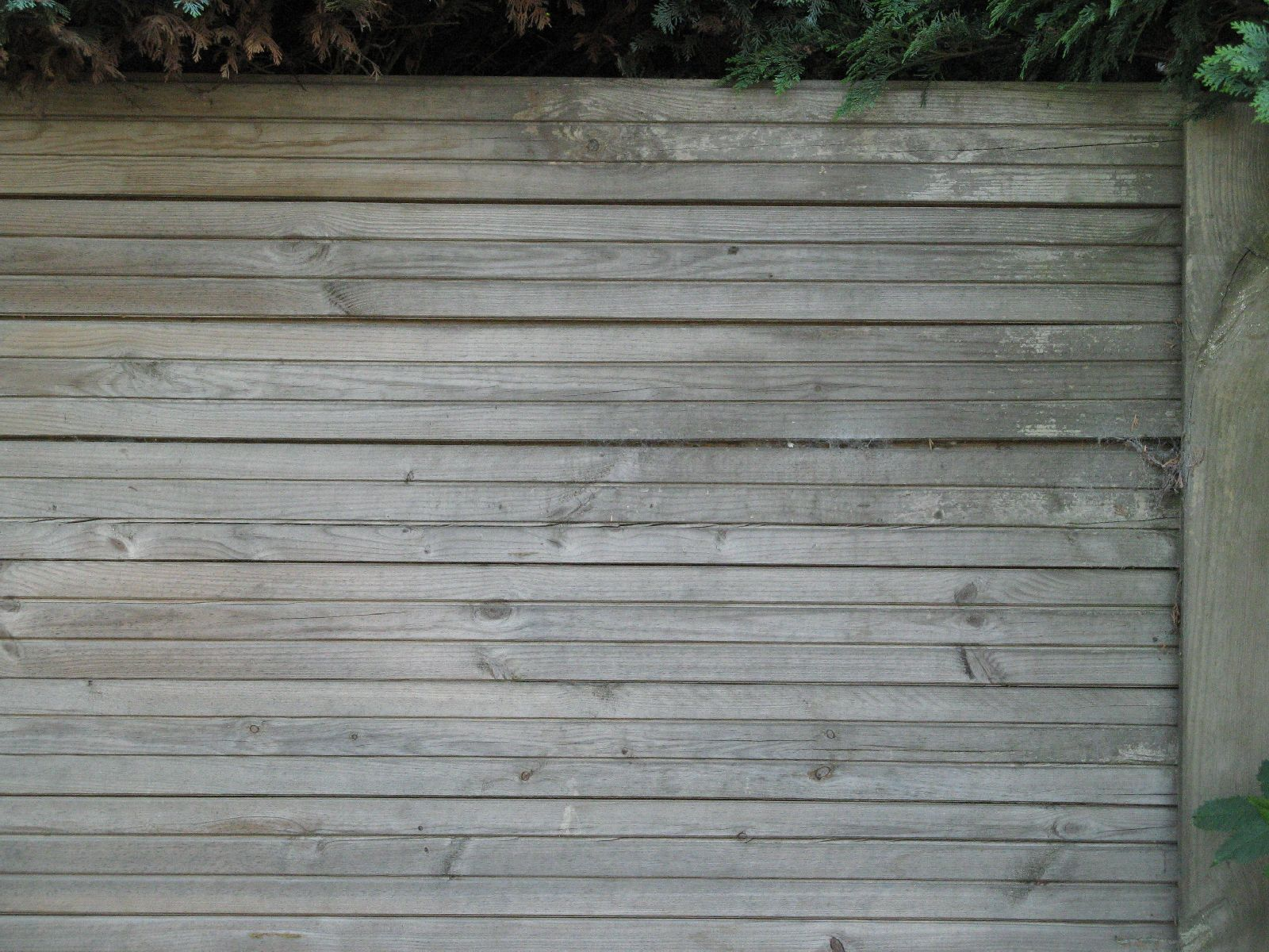 Wood_Textures_B_1173
