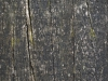 Wood_Texture_A_P5253065