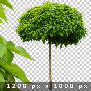 Free_Cut_Out_Tree_Preview