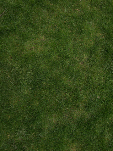 I use this photo to create a tileable grass texture