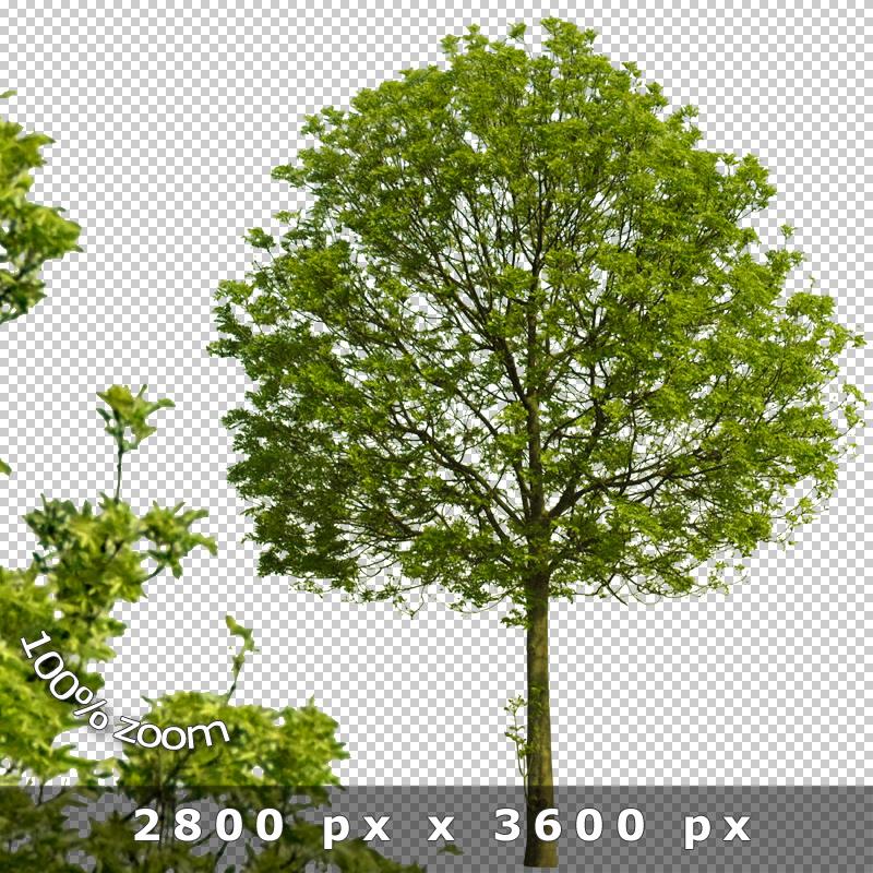 boulevard trees v02  u2013 cutout tree graphics  u00bb tonytextures com