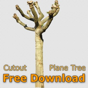 Cutout_Plane_Tree_Free_Download