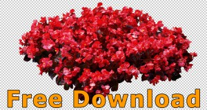 Flower_Cut-out_Free_Download_03