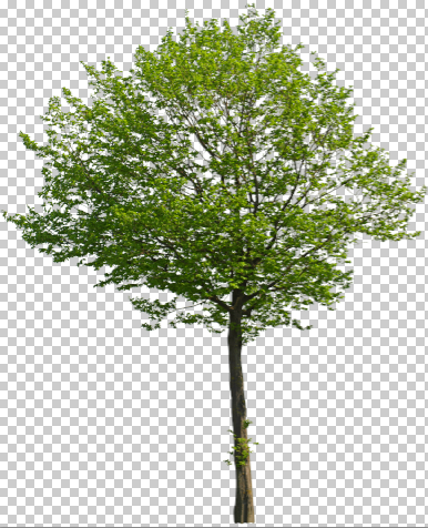29_Cut-out-tree-photoshop-foreground-shadow