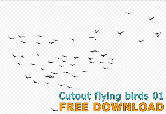 Cutout-flying-birds-01_580