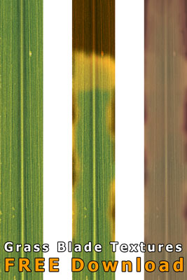 Grass-Blade-Textures-Free-Download-small