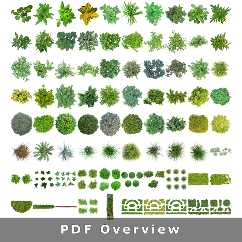 2-library-cutout-plants-architecture-visualization