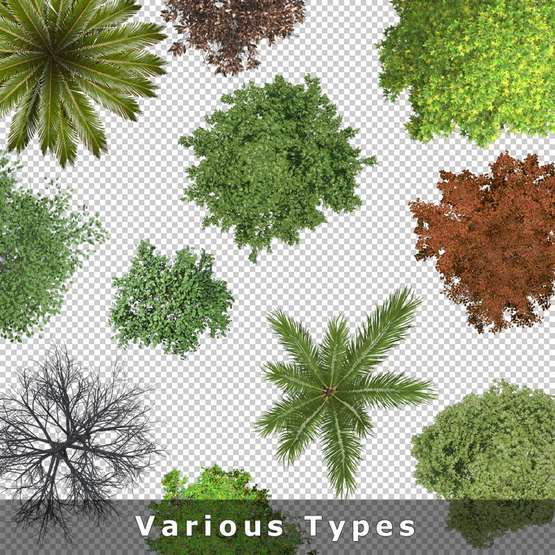 4-ground-floor-landscaping-tree-graphics-types