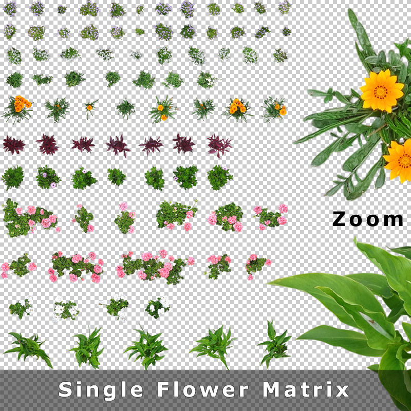 top view flowers cutout plan view images png for garden and