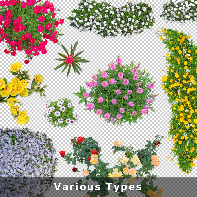 Top View Flowers Cutout Plan View Images Png For Garden And Landscape Planners