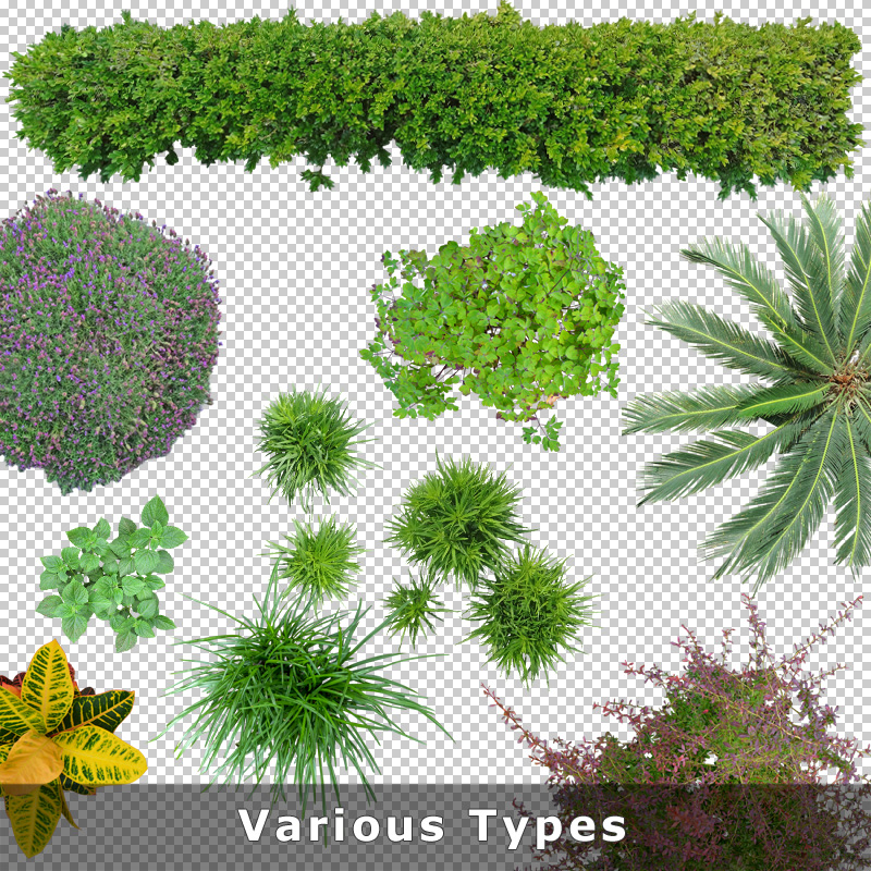 Top View Plants 02 2d Plant Entourage For Architecture Illustration Png