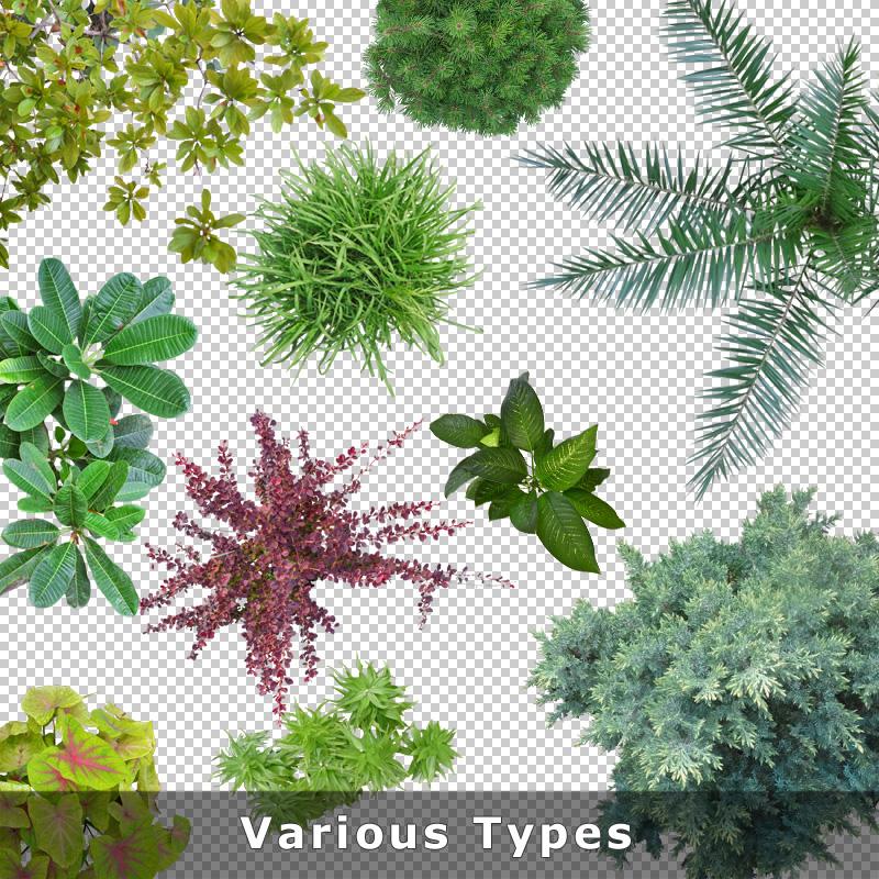 Top View Plants 01 Cutout Plan Plant Graphics PNG