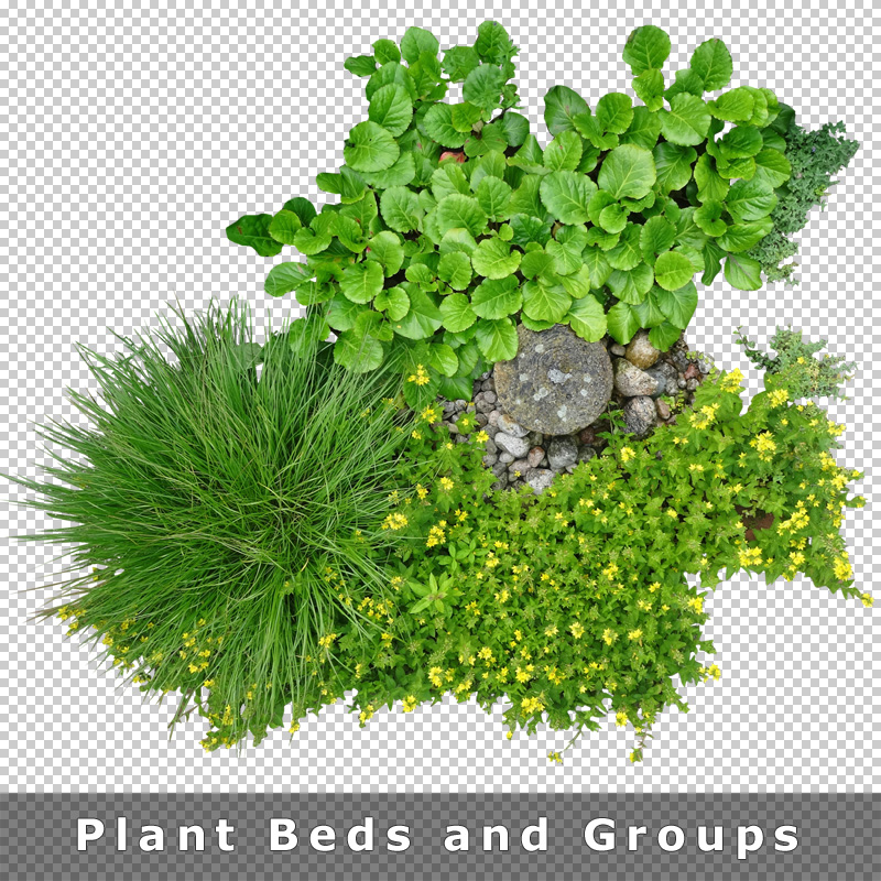 Top View Plants 01 Cutout Plan View Plant Graphics Png For Landscape Design