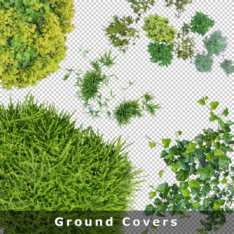 9 ground cover plants graphics cutout plan view