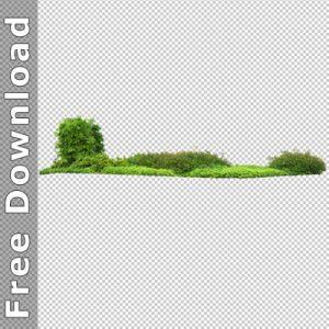 Landscape Architecture Trees