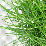 150-cutout-grass-garden-high-res