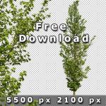 150_BoulevardTreesVol02_free.jpg