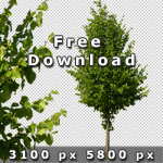150_Cutout-Trees_architecture_V02_free.jpg