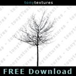 150_p_treesilhouettes_FREE-01.jpg