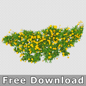 free-download-cutout-flower-top-plan-view