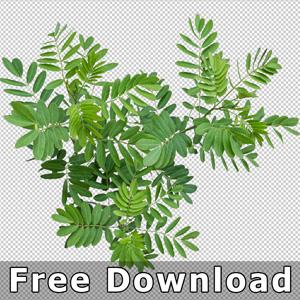300-free-download-top-view-plant-png-landscape-design